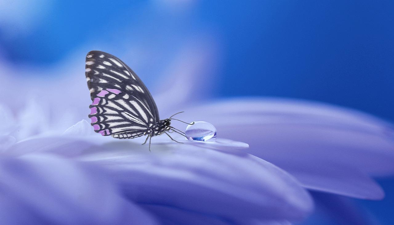 butterfly-drop