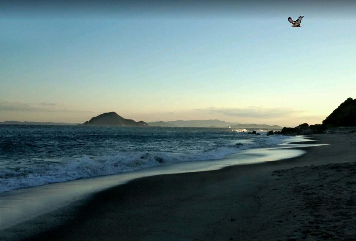 Cape Irago Iragosaki, hawk flying