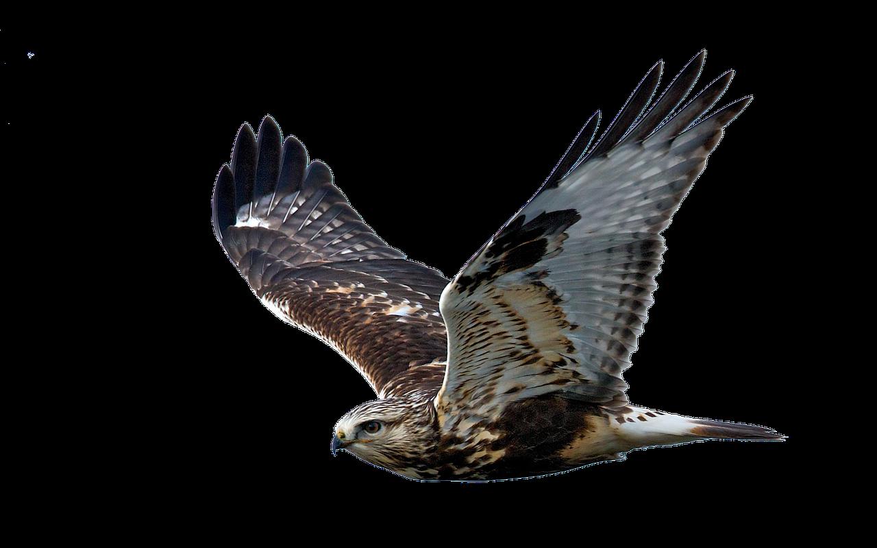hawk-clear